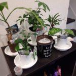 百均の観葉植物をどこまで育てられるか挑戦してみる!